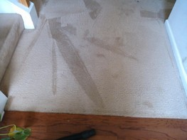 Carpet Cleaning Winston, GA